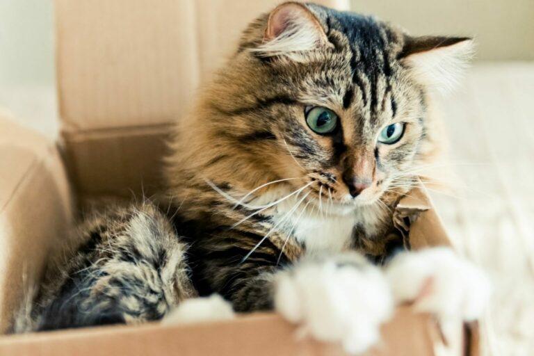 koty kochają kartony