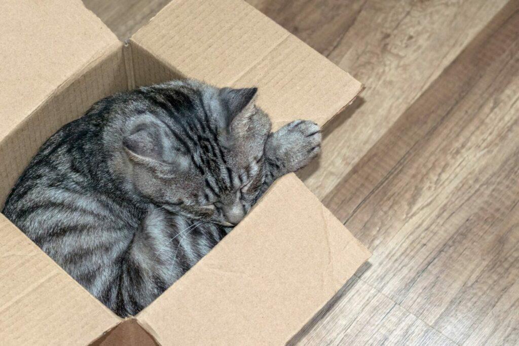 koty kochają pudełka