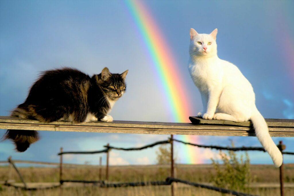 uśpiony kot za tęczowym mostem