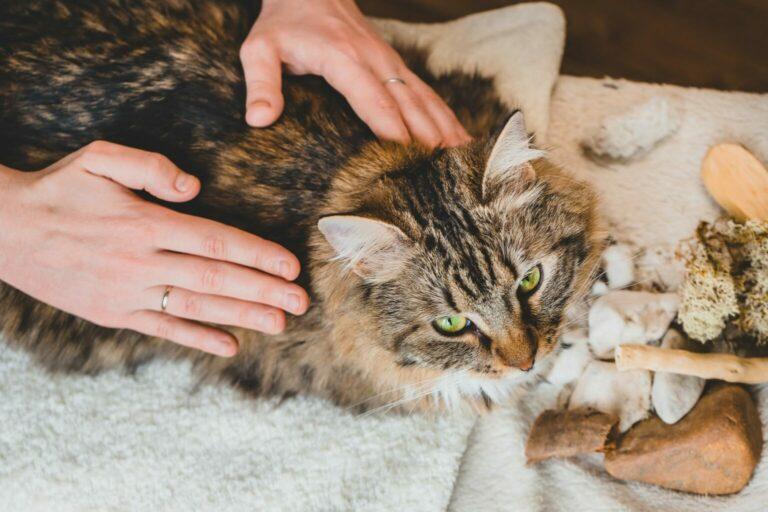 masaż kota
