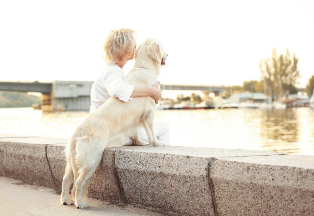 adopcja dorosłego psa