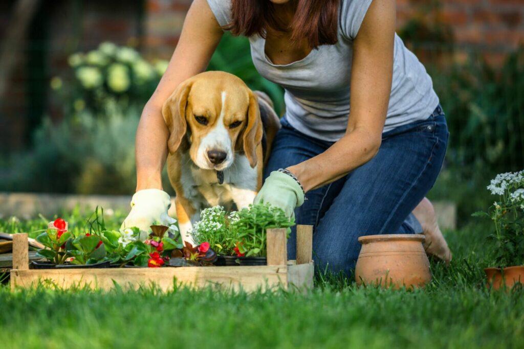 pies chce pomóc w pracy w ogrodzie