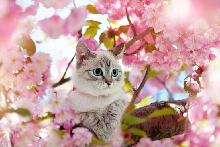 esencje kwiatowe bacha dla kota