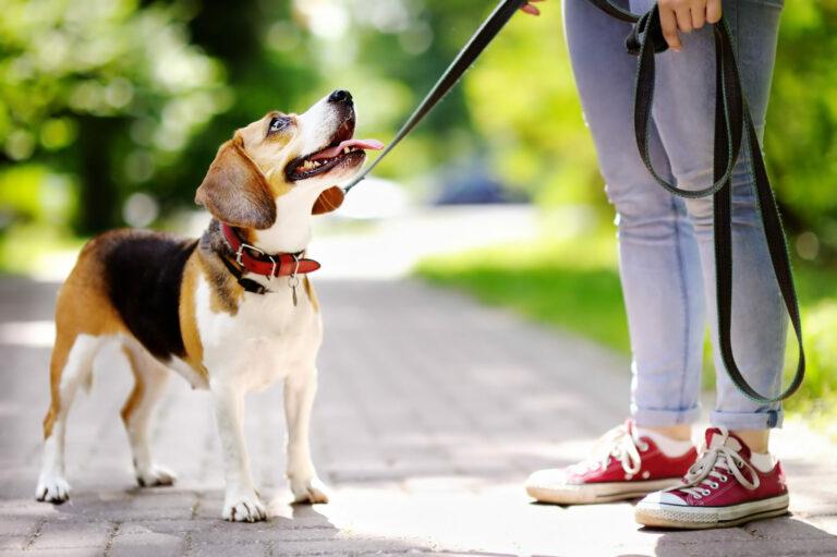 wyposażenie dla psa na spacer