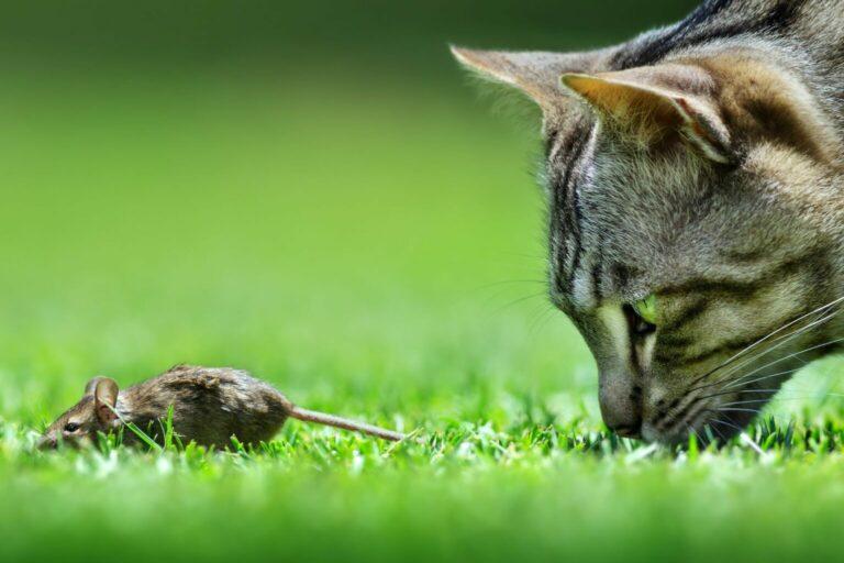 dlaczego należy odrobaczać kota