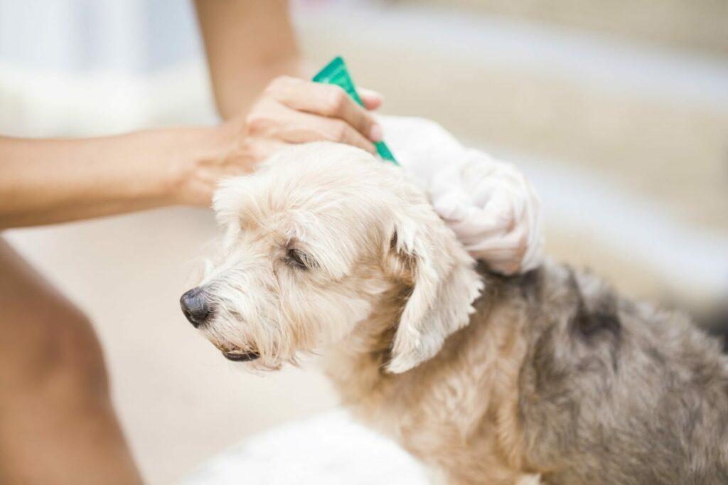 preparaty na kleszcze u psa