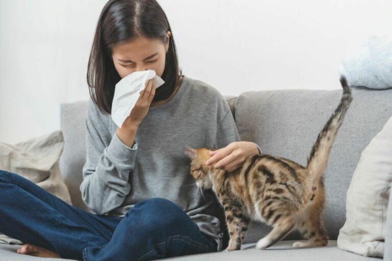 alergia na kota u człowieka