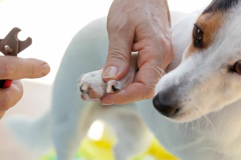 jak obciąć psu pazury