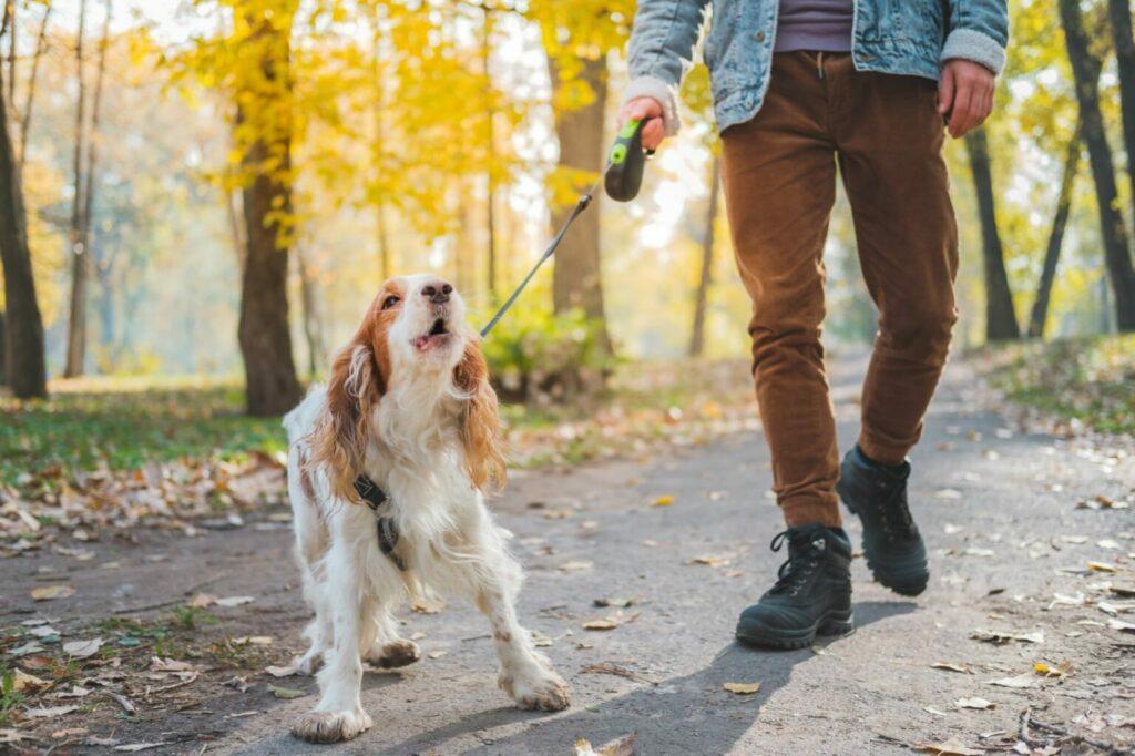 jak oduczyć psa szczekania na obcych