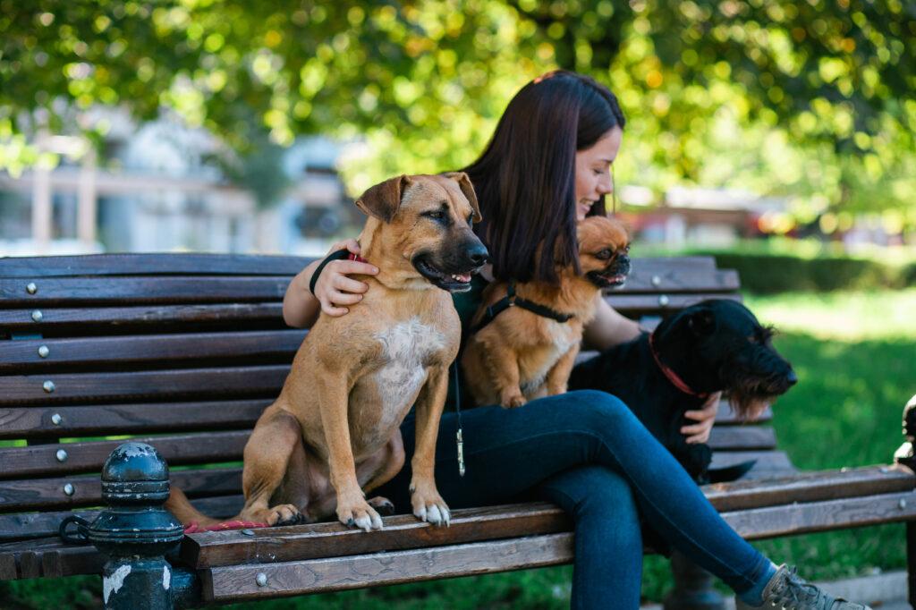 urlop bez psa: opiekun tymczasowy