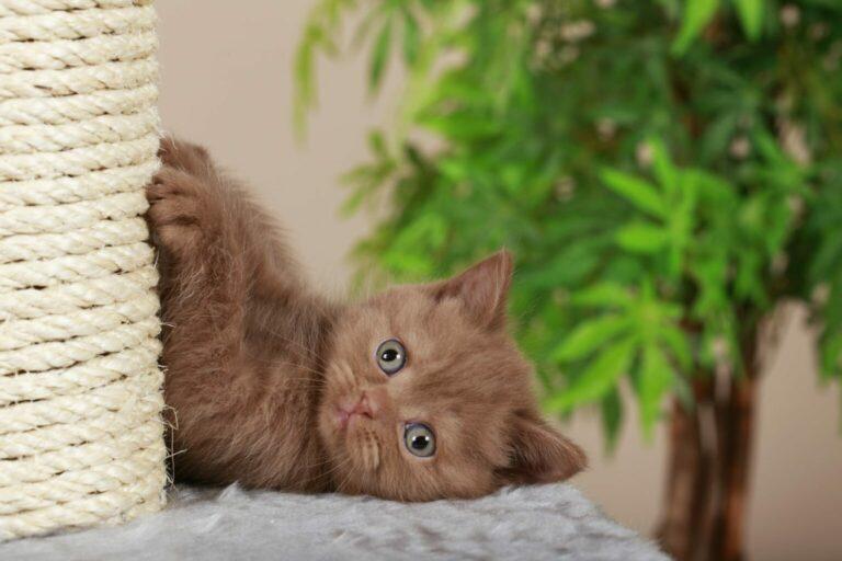 samodzielna budowa drapaka dla kota