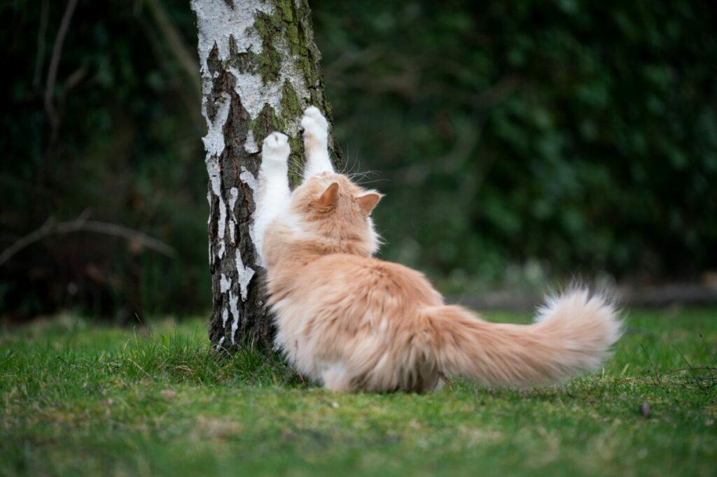 naturalny drapak dla kota