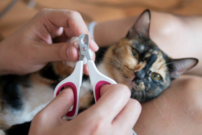 obcinanie kotu pazurów