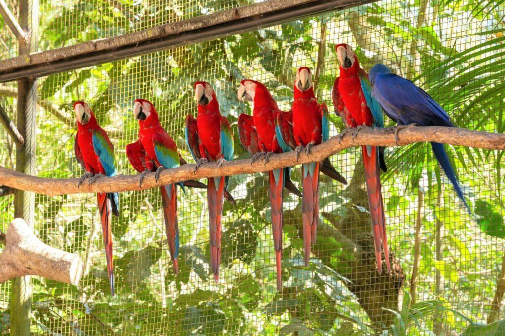 ary w wolierze dla papug