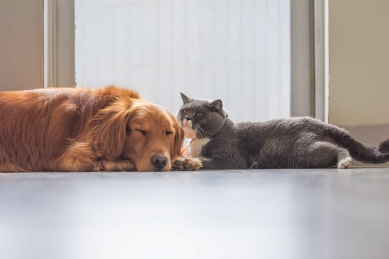 toksoplazmoza u psa